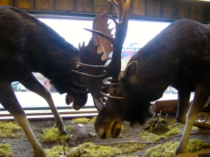 battling moose at LL Bean world headquarters