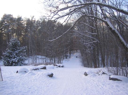 the sled run
