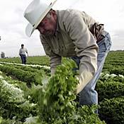 mex farmer