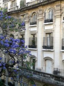 view from my balcony, la jacaranda en flor