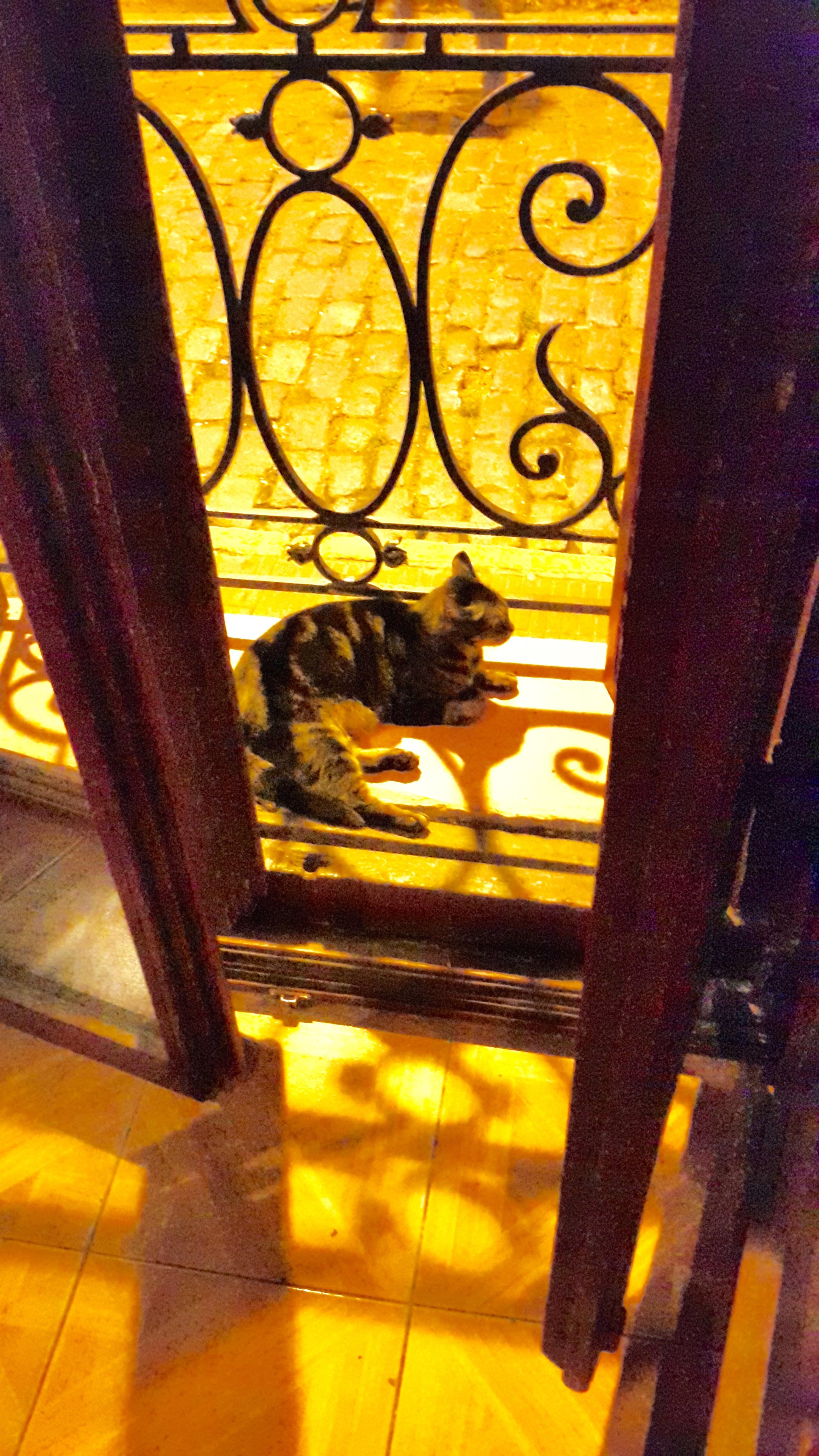 La Dama gato 2*