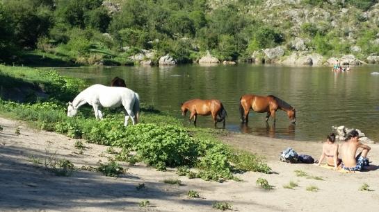 cuesta-blanca-ponies-4