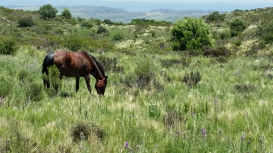 horse-grazing-trail-abv-la-cumbre-1